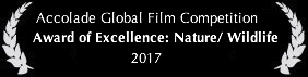 Lemming Accolade Global Film Competition